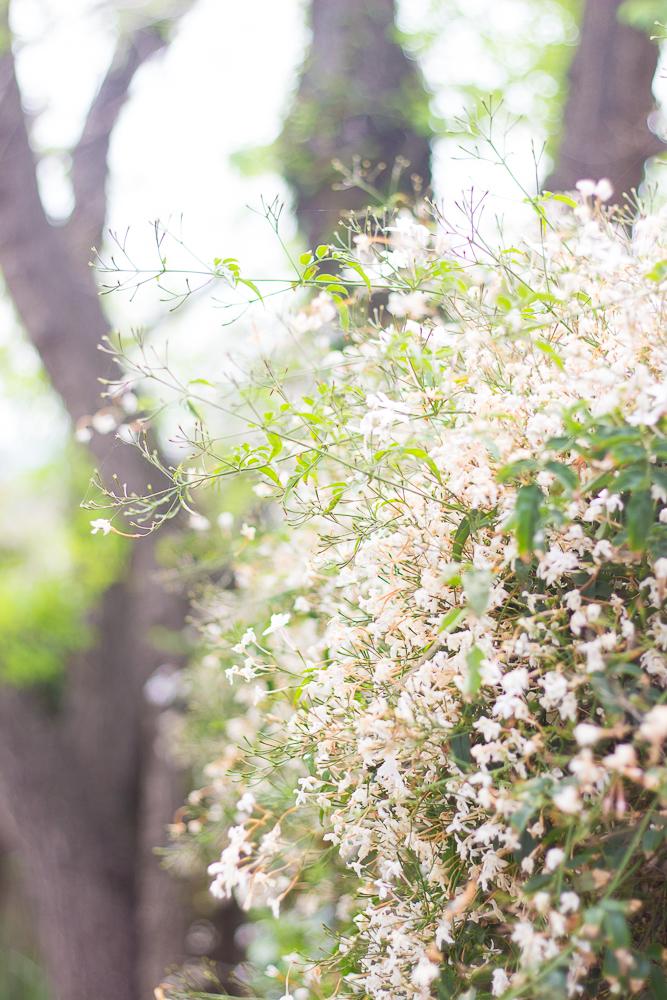 flowers-4