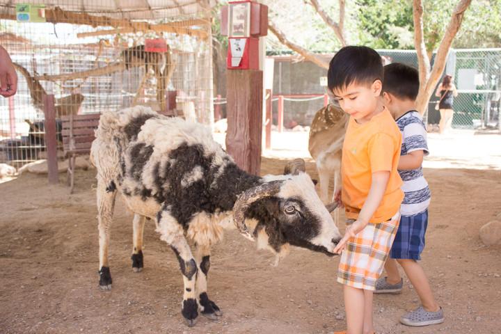 Petting Zoo-1-2